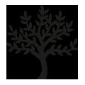 0607_Life-Tree